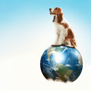 dog_on_top_of_the_world