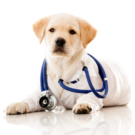 puppy_with_stethescope